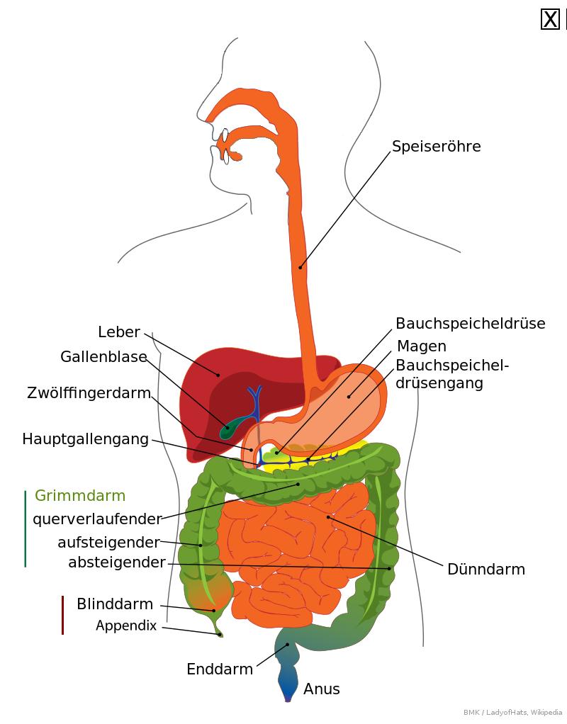 Ungewöhnlich Wo Ist Ihr Blinddarm Entfernt Zeitgenössisch - Anatomie ...